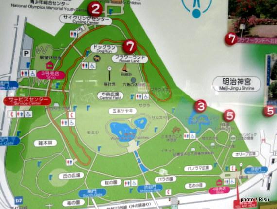 代々木公園ジョギングコース